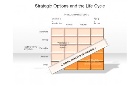 Strategic Options and the Life Cycle