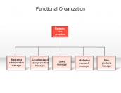 Functional Organization
