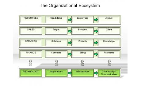 The Organizational Ecosystem