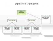 Expert Team Organization